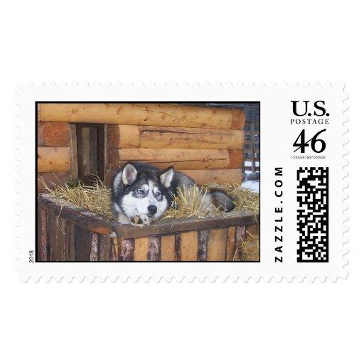 Cabin Fever Postage Stamp