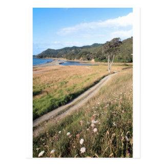 Cabo del este Nueva Zelanda del prado del verano Tarjetas Postales