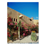 Cabo flores de San Lucas, Baja, México Tarjetas Postales