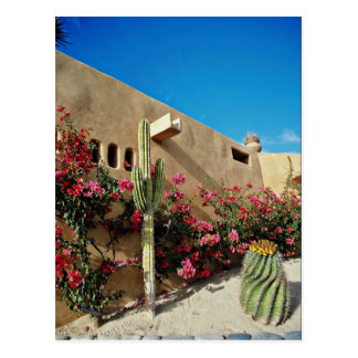 Cabo San Lucas, Baja, Mexico  flowers Postcard