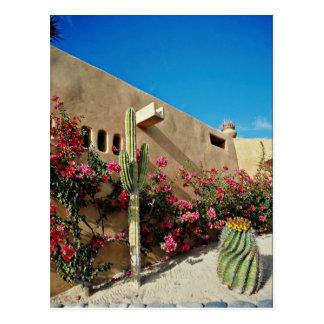 Cabo San Lucas, Baja, Mexico  flowers Postcards