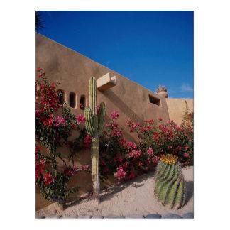 Cabo San Lucas, Baja, Mexico Postcard