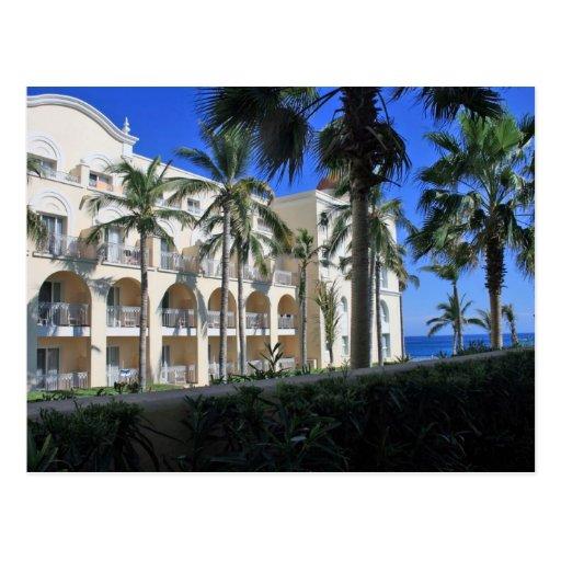 Cabo San Lucas Mexico Palm Trees Blue Sky Post Card