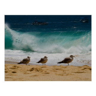 Cabo Seagull 2 Poster