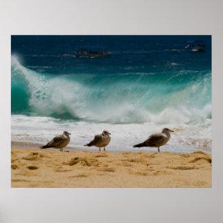 Cabo Seagull 2 Print