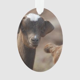 Cabra adorable del bebé