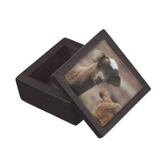 Cabra adorable del bebé cajas de recuerdo de calidad