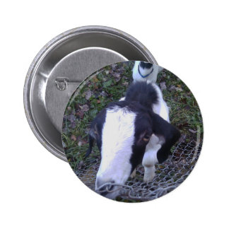 Cabra amistosa pin