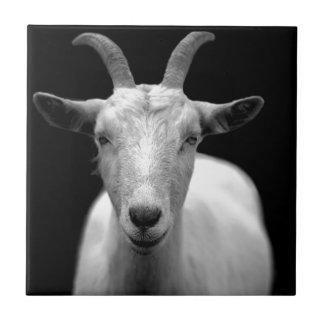 Cabra Azulejo