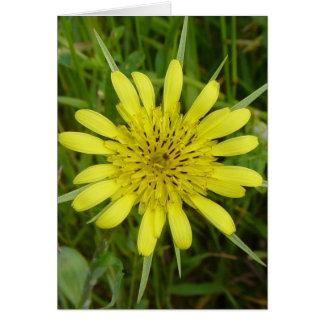 Cabra-barba amarilla del Wildflower F0009 Tarjeta De Felicitación