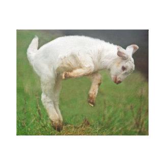 Cabra blanca del bebé divertido de la cabra que impresión en lienzo