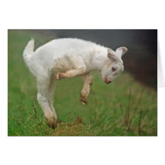Cabra blanca del bebé divertido de la cabra que tarjeta de felicitación