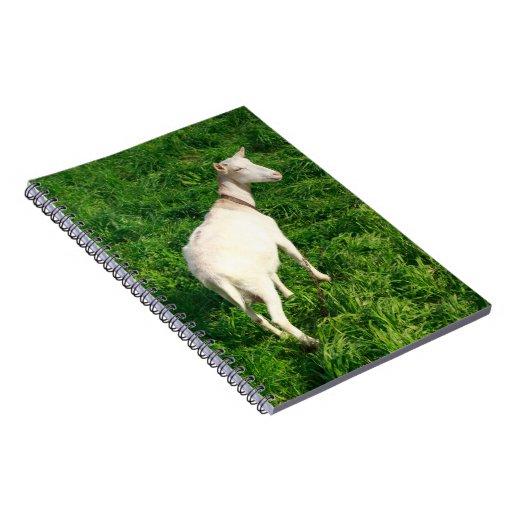 Cabra blanca libretas