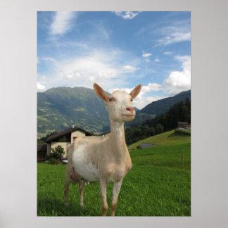 Cabra blanca posters