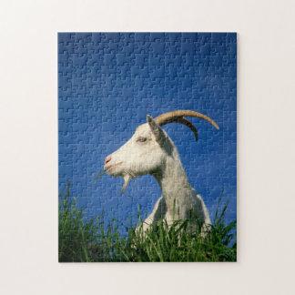 Cabra blanca que pasta puzzles con fotos