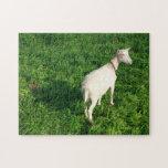 Cabra blanca rompecabeza con fotos