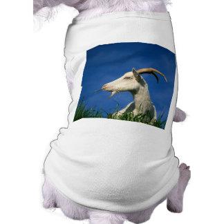 Cabra blanca playera sin mangas para perro