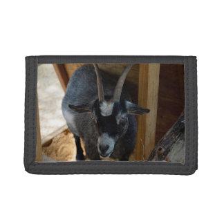 cabra blanco y negro debajo del animal de madera