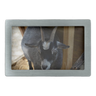 cabra blanco y negro debajo del animal de madera hebilla cinturon rectangular