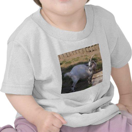 cabra camiseta