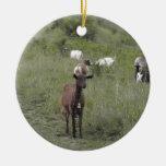 Cabra de Brown Ornamento De Reyes Magos