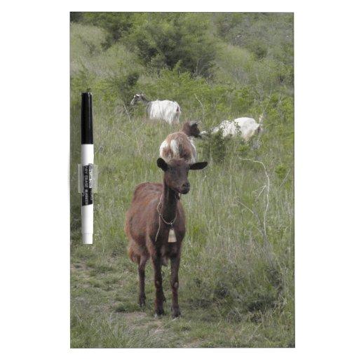 Cabra de Brown Pizarra Blanca