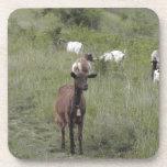 Cabra de Brown Posavaso