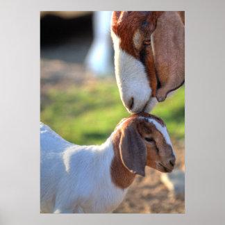 Cabra de la madre que besa a su bebé en la cabeza póster