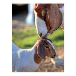 Cabra de la madre que besa a su bebé en la cabeza postales