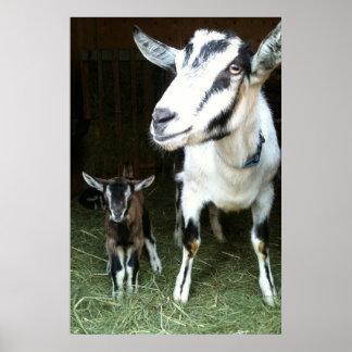Cabra de la mamá con el poster del jengibre del
