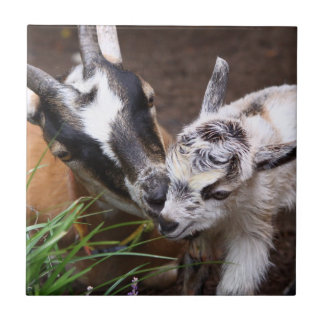 Cabra de la mamá y del bebé teja
