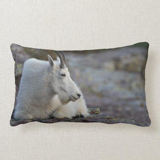 Cabra de montaña almohada