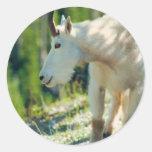 Cabra de montaña blanca etiqueta redonda