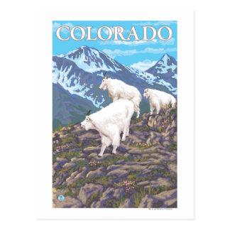 Cabra de montaña blanca FamilyColorado Tarjetas Postales