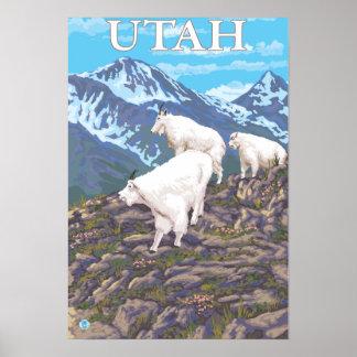 Cabra de montaña blanca FamilyUtah Póster