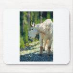 Cabra de montaña blanca tapetes de raton