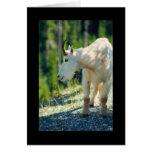 Cabra de montaña blanca tarjeton