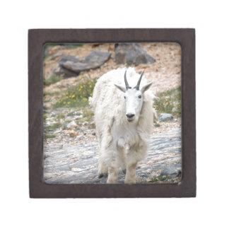 Cabra de montaña cajas de regalo de calidad