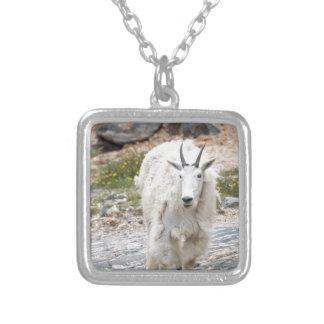 Cabra de montaña colgante cuadrado