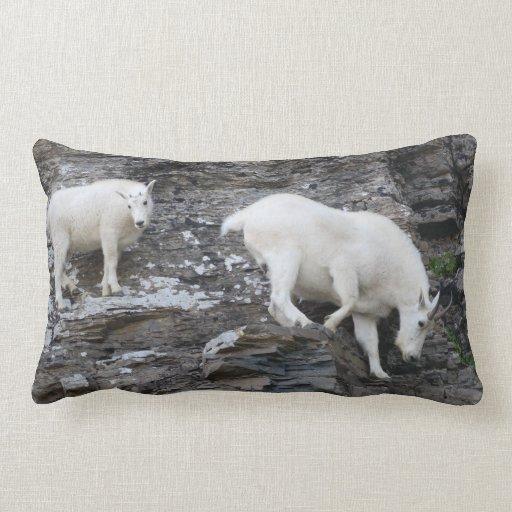 cabra de montaña con el bebé almohada