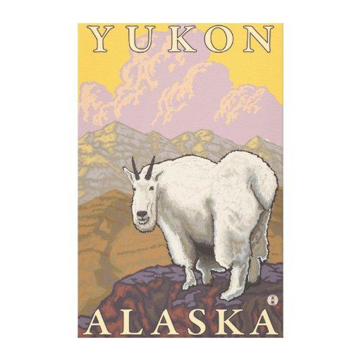 Cabra de montaña - el Yukón, Alaska Lienzo Envuelto Para Galerías