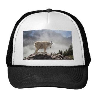Cabra de montaña en rastro del paso del Gunsight Gorras