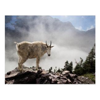 Cabra de montaña en rastro del paso del Gunsight Postales