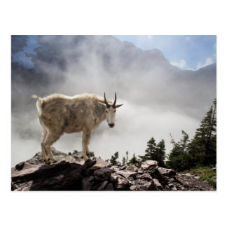 Cabra de montaña en rastro del paso del Gunsight Postal