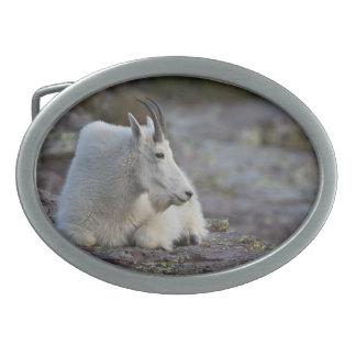 Cabra de montaña hebillas cinturon ovales