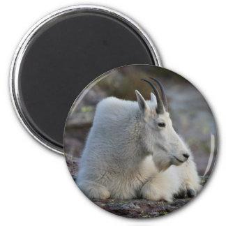 cabra de montaña imanes para frigoríficos