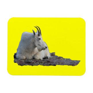 cabra de montaña iman flexible