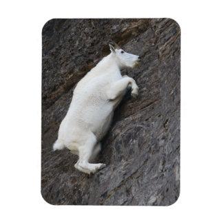 Cabra de montaña iman rectangular