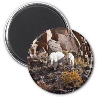 Cabra de montaña imán redondo 5 cm
