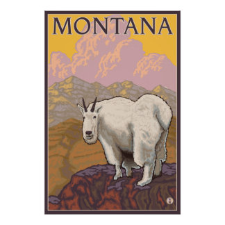 Cabra de montaña - Montana Poster